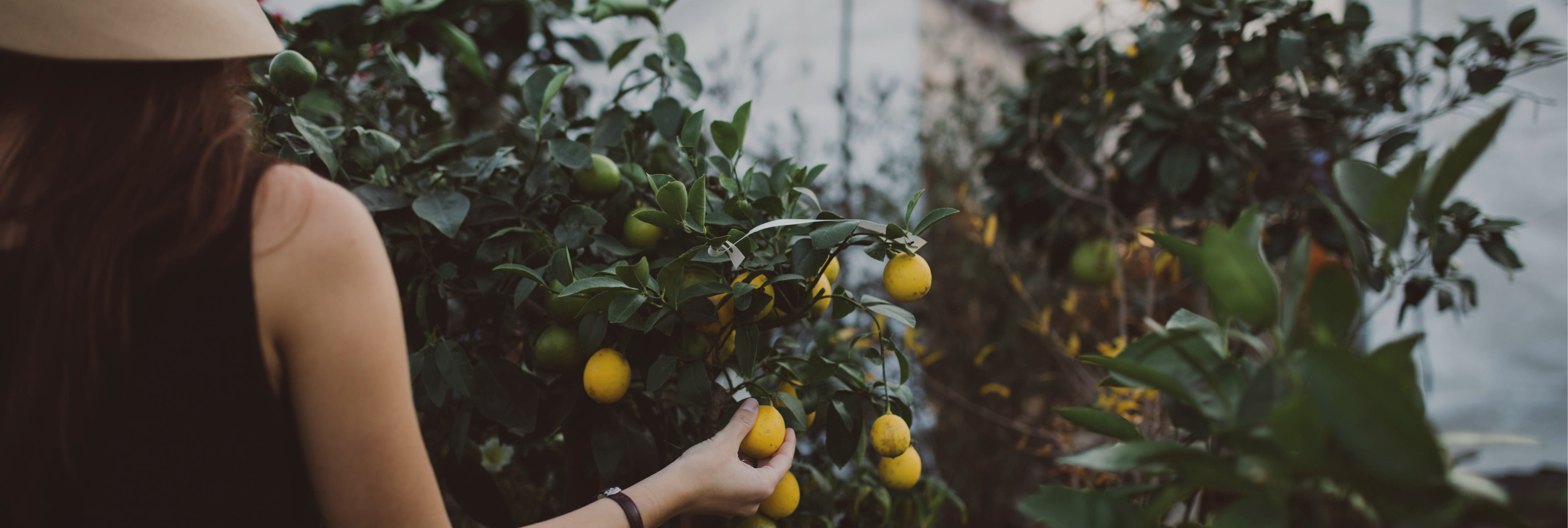 How can we use technology to guarantee sufficient food for everyone?